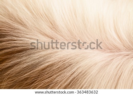 Furry long hair of  brown and white dog background #363483632