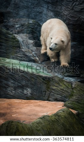 Picture of a polar bear in a zoo in Prague, Czech Republic