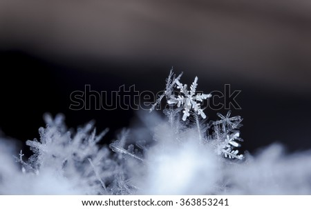 snowflakes on snow. the picture is made at a temperature of-8 C photo real snowflakes during a snowfall, under natural conditions at low temperature