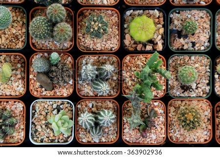 Variety of small beautiful cactus in the pot, seen from top. #363902936