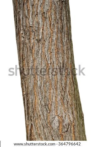 Tree bark texture isolated on white, oak wood background #364796642