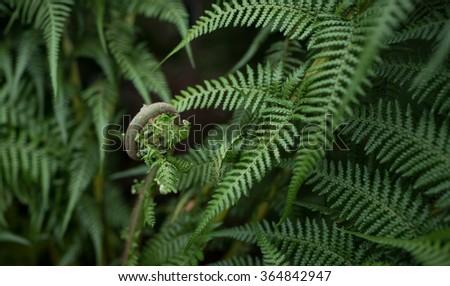 Frond of a fern #364842947