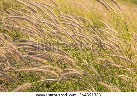 spring grass in sun light and defocus sky on background #364851383