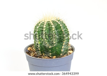 close up Cactus isolated on white background #364943399