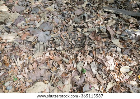 Dry leaf #365115587