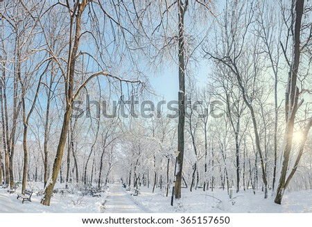 Public park from Europe with trees and branches covered with snow and ice, benches, light pole, landscape. #365157650