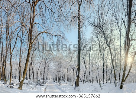 Public park from Europe with trees and branches covered with snow and ice, benches, light pole, landscape. #365157662