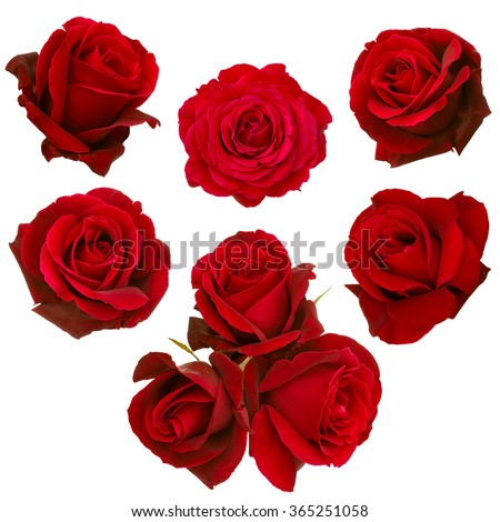 collage of red roses isolated on white background Royalty-Free Stock Photo #365251058