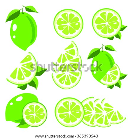Collection of limes vector illustrations #365390543