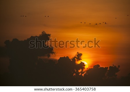 a silhouette picture of the cloud and birds
