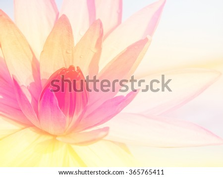 Close up lotus in the river on blur background.Beautiful lotus flower made with color filters.