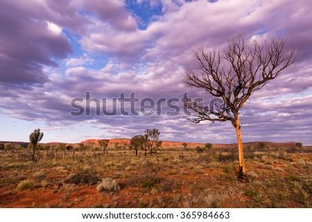 Alone Tree at Kings Canyon, Northern Territory, Australia #365984663
