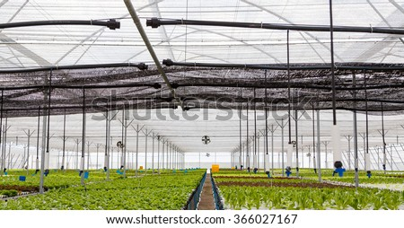Picture of Organic hydroponic vegetable cultivation farm
