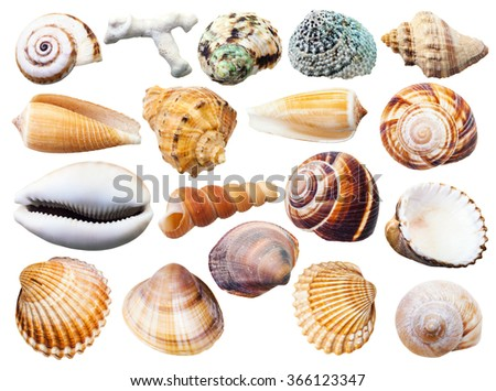 set of various mollusk shells isolated on white background Royalty-Free Stock Photo #366123347