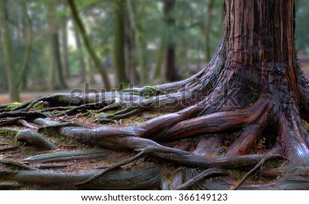 tree roots and green forest #366149123