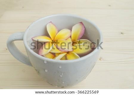 flower in mug #366225569