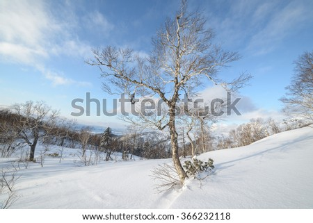 Trees in the snow, the winter in the mountains. Sakhalin Island, Russia. #366232118