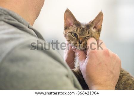 Grumpy cat looking at you close up portrait #366421904