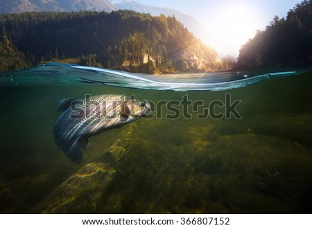 Fishing. Close-up shut of a fish hook under water  Royalty-Free Stock Photo #366807152