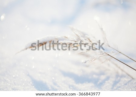 Frozen yellow dry grass with snow. Selective focus.  #366843977