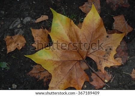 Autumn leaf #367189409