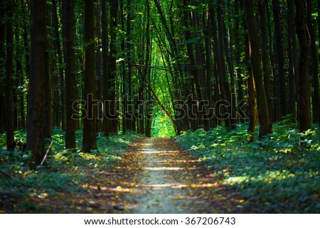 beautiful green forest #367206743