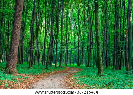 beautiful green forest #367216484