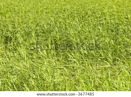 Blades of grass #3677485