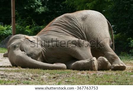 rolling elephant #367763753