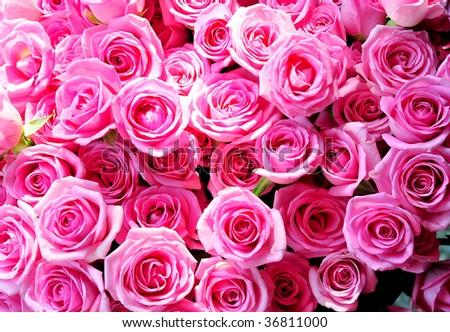 pink rose #36811000