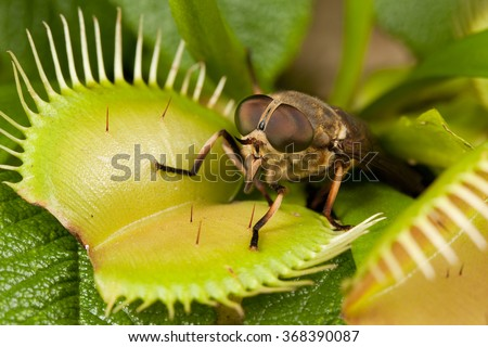 Horse-fly and flytrap #368390087