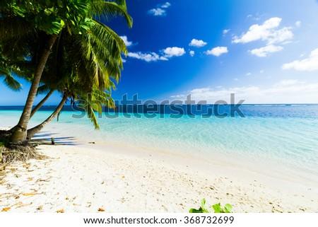 palm trees on beach near crystal clear blue sea on pacific island  #368732699