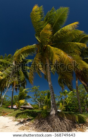 coconut trees on a white sand beach and crystal clear blue sea #368749643
