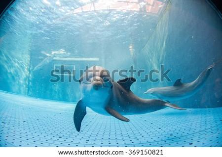 dolphin underwater in aquarium looking at you #369150821