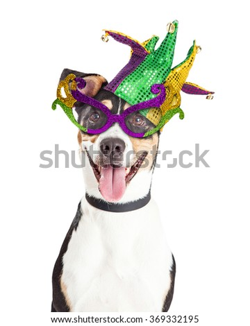 Funny photo of a happy and smiling dog wearing Mardi Gras glasses and jester hat