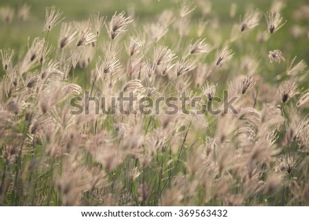 grass and wind. #369563432