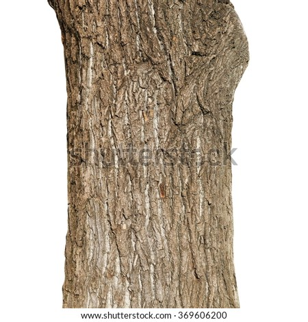 old tree trunk, weeping willow tree isolated on white background #369606200