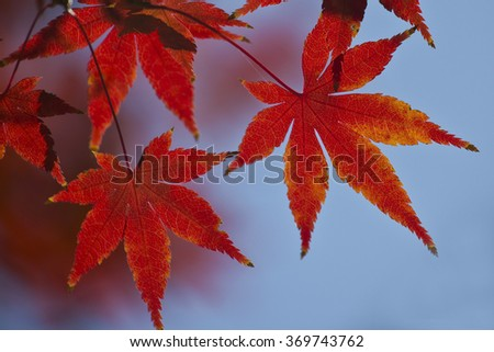 Autumn leaves #369743762