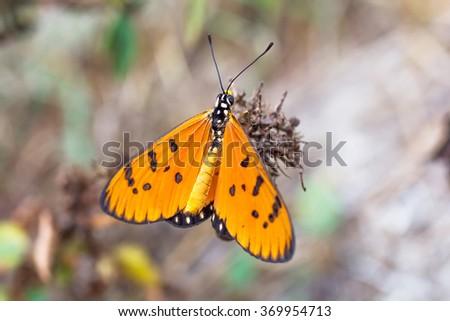 closeup of a butterfly #369954713
