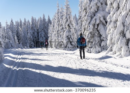 Winter road in mountains. Skier on groomed ski trails for cross-country. Trees covered with fresh snow in sunny day in Karkonosze, Giant Mountains, Poland.  #370096235