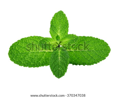 Fresh mint leaves isolated on white background. #370347038