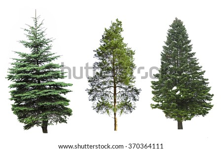 Fir-trees, isolated on white #370364111