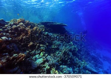 coral reef underwater photo #370509071