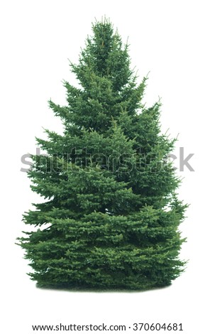 Spruce tree isolated on white background #370604681