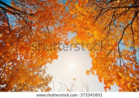 Yellow leaves of the trees on the background solar sky #371045801