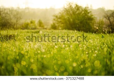 Grass  #371327488