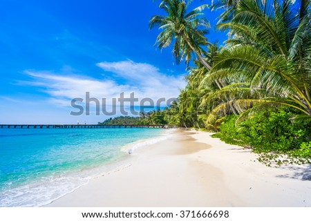 tropical beach.  sea and coconut palm.  Landscape of paradise tropical island beach #371666698