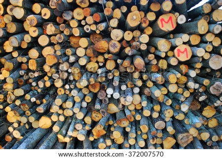 Pile of chopped fire wood. Cutting down trees. #372007570