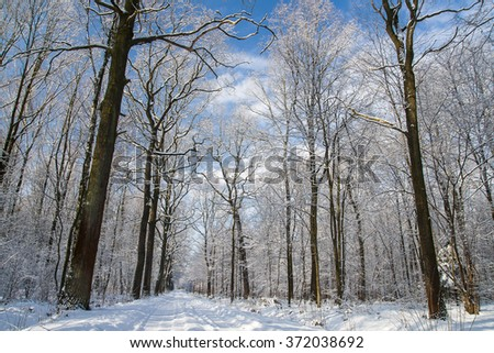 Forest in winter #372038692