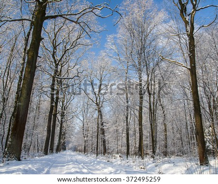 Forest in winter #372495259